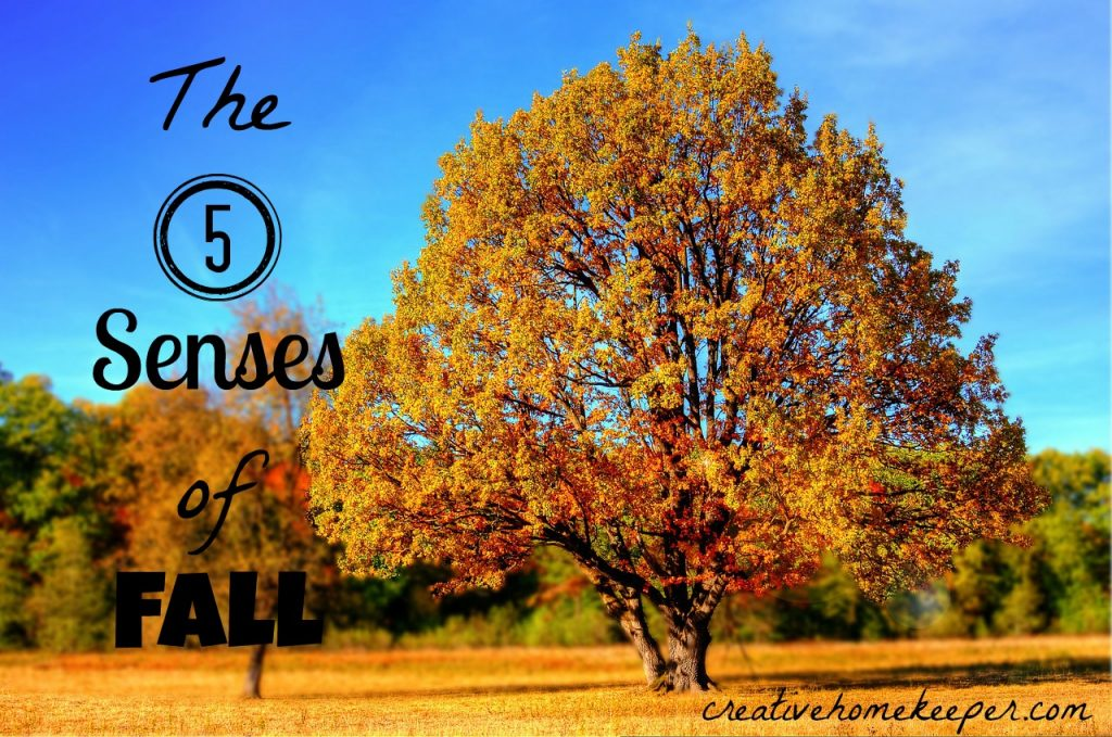 5 senses of fall