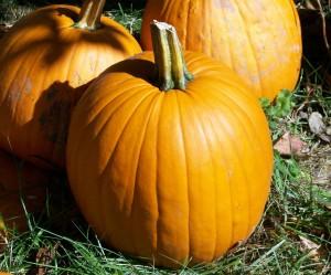 pumpkins-18427_1280