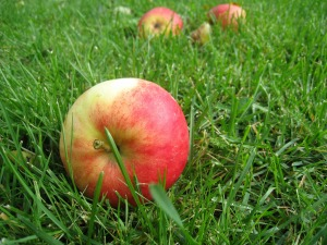 apples-85152_1920