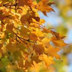 Your Intentional Fall is Here! {A Seasonal Gallery}